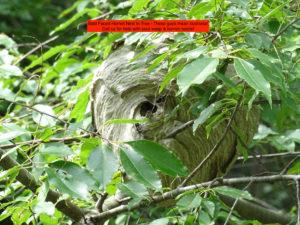 hornet nest example