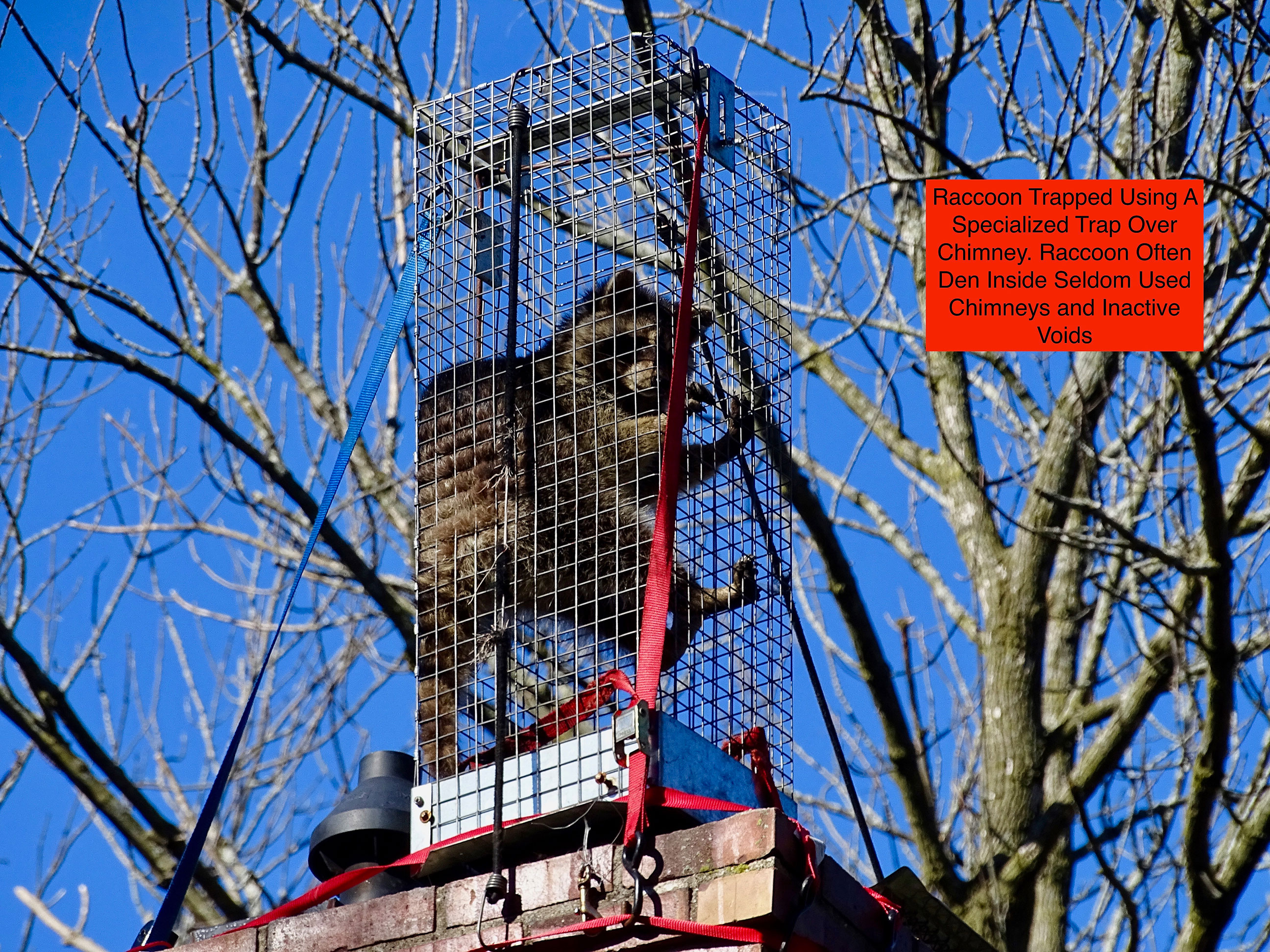 Chimney Caps Amp Vent Guards When Nature Calls Pest Control