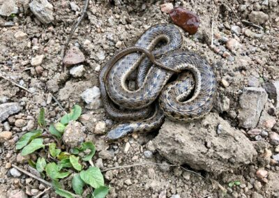 WNC Pest Control - snake removal 1
