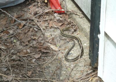WNC Pest Control - snake removal 4