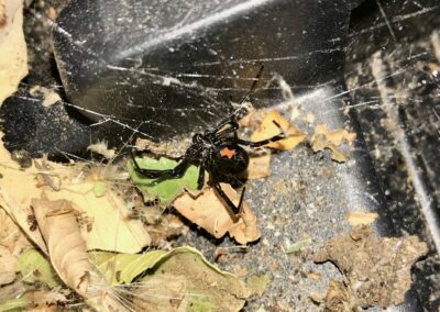 WNC - Spiders 1